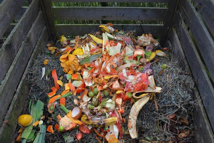 Food Scraps on Compost Pile