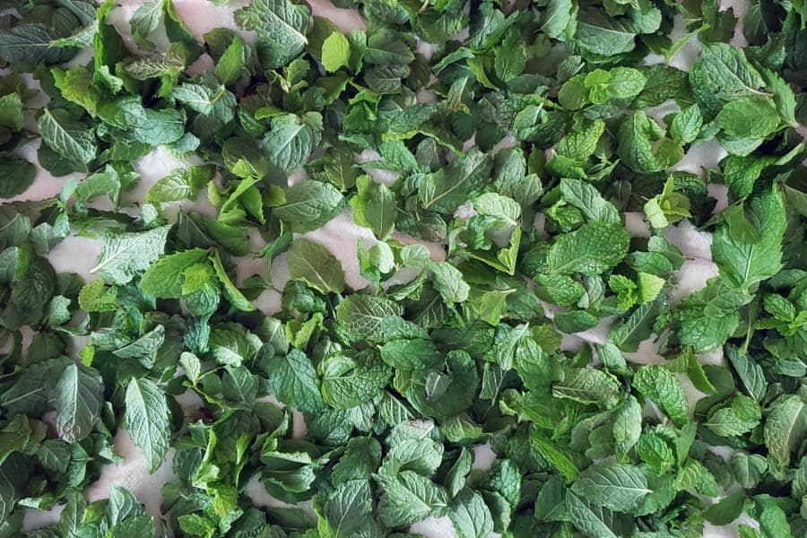 Fresh Herbs drying on white towel