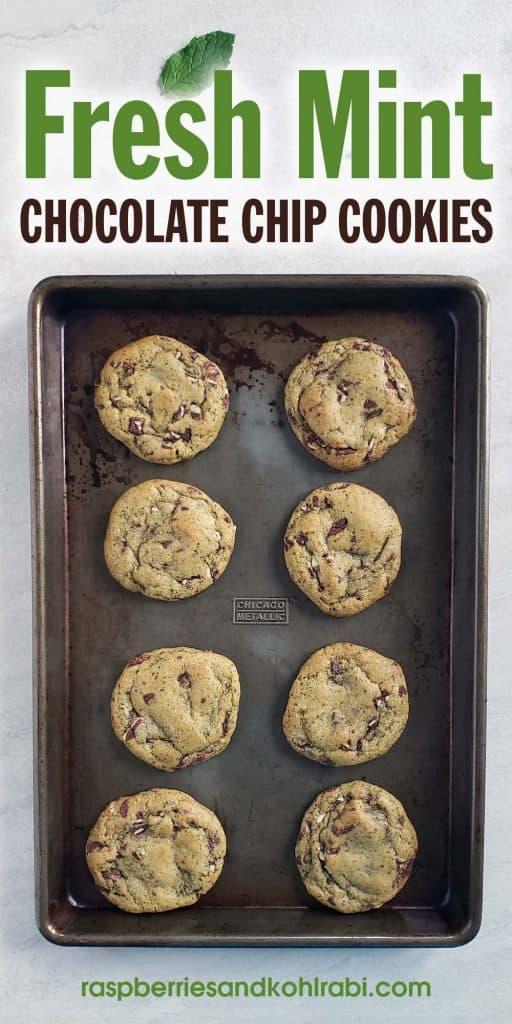 Fresh mint chocolate chip cookies on a dark baking sheet
